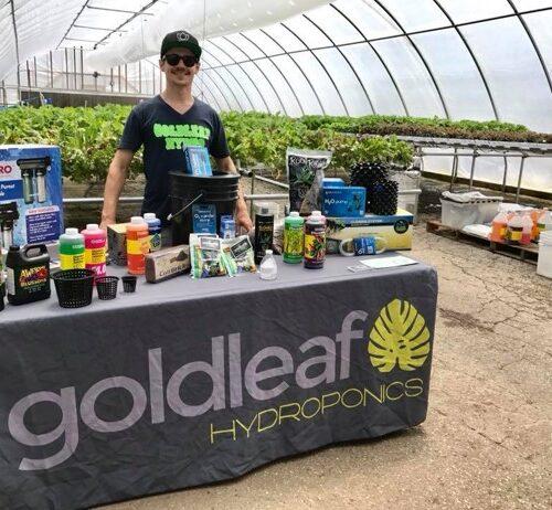 Goldleaf Kyle in Greenhouse