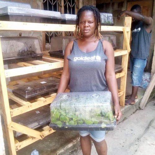 African Kratom Farm