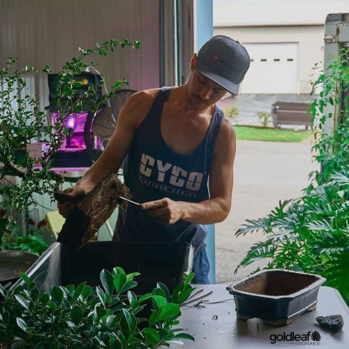 Bonsai Workshop at Goldleaf Hydroponics