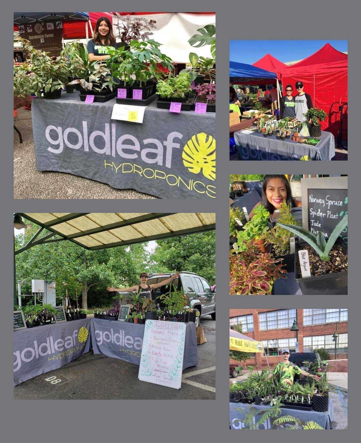 Goldleaf Farmers Market Bloomington
